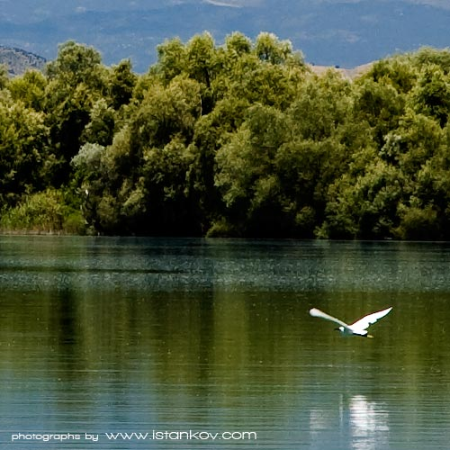 Birdwatching In Montenegro